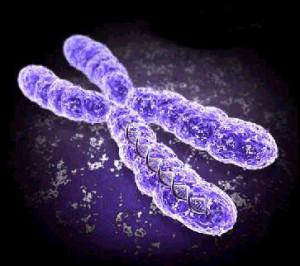12_chromosome
