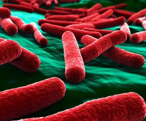 החיידק הטורף