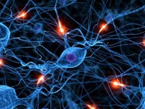 תאי עצב במוח