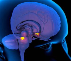 נוירונים ואוטיזם